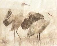 Sandhill Cranes 2 Framed Print