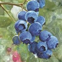 Blueberries 4 Framed Print