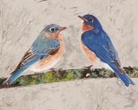 Eastern Bluebirds 2 Framed Print