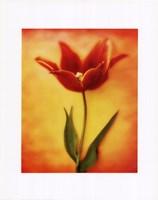 "Tulip I by Richard Henson - 11"" x 14"""
