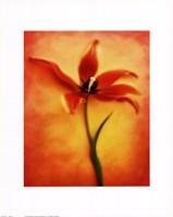 "Tulip II by Richard Henson - 11"" x 14"""