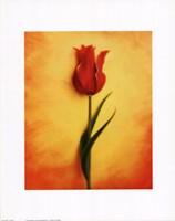 "Tulip III by Richard Henson - 11"" x 14"""