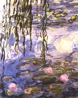Waterlilies (pink flowers) Fine Art Print