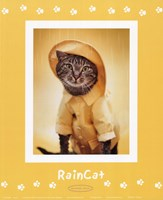 Raincat Framed Print