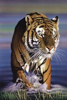 "Tiger In Water by Richard Henson - 24"" x 36"""