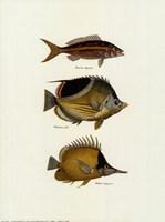 Tropical Fish Fine Art Print
