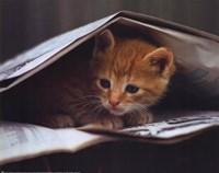 Smart Cat Fine Art Print