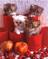 Cats and Cherry Fine Art Print