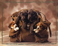 Puppies Fine Art Print