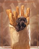 Puppy Fine Art Print