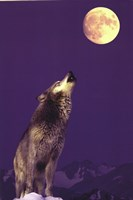 Gray Wolf Howling At Moon Fine Art Print