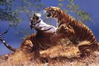 "Tigers Fighting by Richard Henson - 36"" x 24"""
