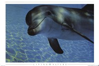 "Dolphin Underwater by Richard Henson - 36"" x 24"""