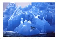 Penguins on Blue Ice Framed Print