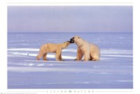 "Polar Bear Courting by Richard Henson - 36"" x 24"""