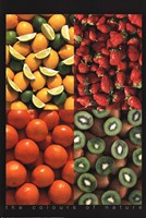 "Fruits the Colours of Nature by Richard Henson - 24"" x 36"""
