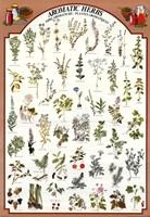 Aromatic Herbs Fine Art Print