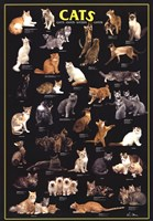 Cat Breeds Black Wall Poster