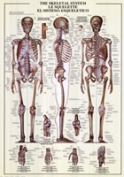 "Skeletal System by Richard Henson - 27"" x 38"""