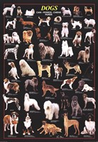 Dogs Wall Poster