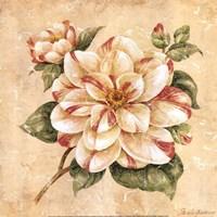 Camellia Fine Art Print