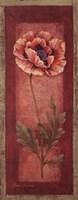 Red Door Poppy Framed Print