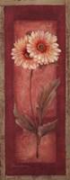 Red Door Gaillardia Framed Print