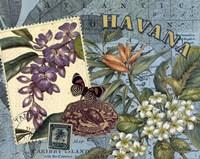 Havana Fine Art Print