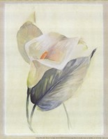 "Calla Lily III by Paul Hargittai - 8"" x 10"""