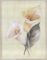 Calla Lily IV Fine Art Print