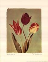 Spring Color I Fine Art Print