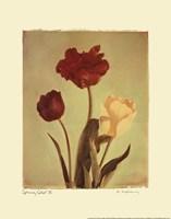 Spring Color IV Framed Print
