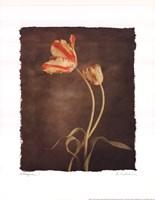 Allegria I Framed Print