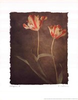 Allegria III Framed Print