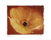 Poppy I Framed Print