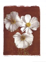 """White Cosmos I by Amy Melious - 16"""" x 20"""""""