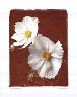 """White Cosmos II by Amy Melious - 16"""" x 20"""""""