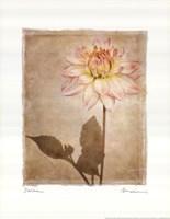 Dahlia Fine Art Print
