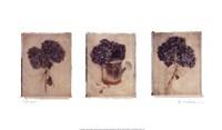"""Hydrangeas by Amy Melious - 22"""" x 13"""""""