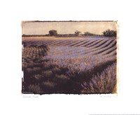 "17"" x 14"" Lavender Fields Pictures"