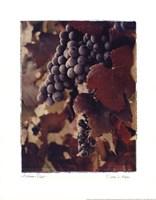 Autumn Print Framed Print