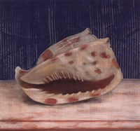Brown Spotted Shell Fine Art Print