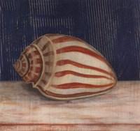 Striped Shell Fine Art Print