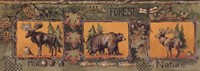 Forest Fine Art Print