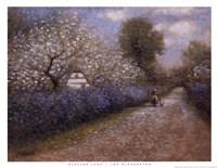 Blossom Lane Framed Print