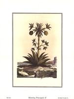 Pineapple II Framed Print