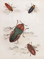 Chelsea Beetles-1 of 3 Fine Art Print