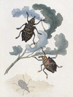 Chelsea Beetles-3 of 3 Fine Art Print