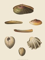 Shells-1 of 8 Fine Art Print