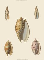 Shells-4 of 8 Fine Art Print
